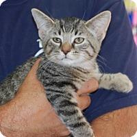 Adopt A Pet :: Fred - Brooklyn, NY