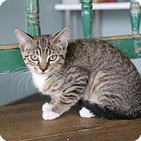 Adopt A Pet :: Vicky - San Antonio, TX