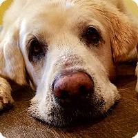 Adopt A Pet :: Cesar - Nashville, TN
