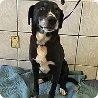 Adopt A Pet :: Jasper - Cumming, GA