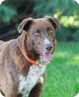 Border Collie Mix Dog for adoption in Washoe Valley, Nevada - Skip