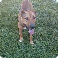 Adopt A Pet :: Edie - Dayton, OH