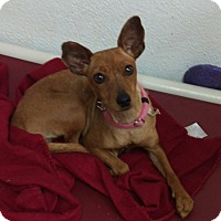 Adopt A Pet :: Faith - Apache Junction, AZ