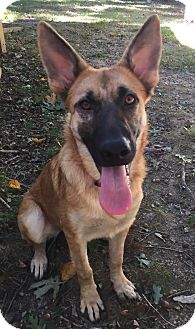 German Shepherd Dog Mix Dog for adoption in Greeneville, Tennessee - Tova