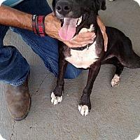 Adopt A Pet :: Kim - Providence, RI