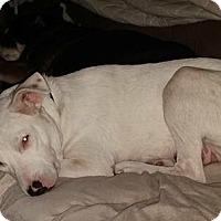 Adopt A Pet :: Lucy 35 lbs - Pompton Lakes, NJ