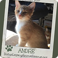 Adopt A Pet :: ANDRE - Lincoln, NE