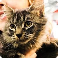 Adopt A Pet :: Katydid - Morgan Hill, CA