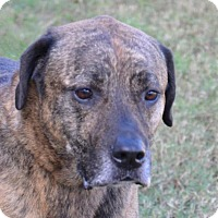 Adopt A Pet :: Rodney - Englewood, FL