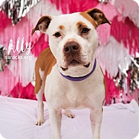 Adopt A Pet :: Ally - San Antonio, TX