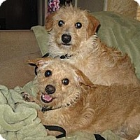 Adopt A Pet :: Skipper and Gilligan - Phoenix, AZ