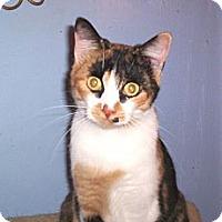 Adopt A Pet :: Autumn - Grand Chain, IL
