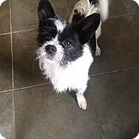 Adopt A Pet :: Bandit - Freeport, NY