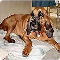 Adopt A Pet :: Georgie - Phoenix, AZ