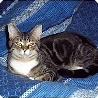 Adopt A Pet :: Jimmy - bloomfield, NJ
