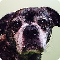 Adopt A Pet :: Brinley - Russellville, KY