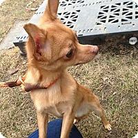 Adopt A Pet :: Dodger - Chicago, IL