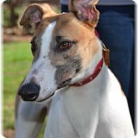 Adopt A Pet :: Riddle - Harrisburg, PA