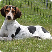 Adopt A Pet :: Beauty - Delaplane, VA