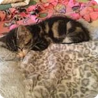 Adopt A Pet :: RACHEL - 2015 - Hamilton, NJ