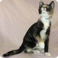 Adopt A Pet :: Caspian - Powell, OH