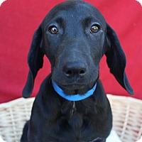 Adopt A Pet :: Abner - Waldorf, MD