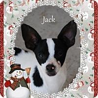 Adopt A Pet :: Jack - Crowley, LA