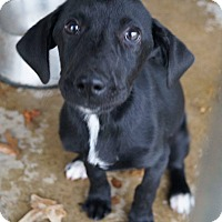 Adopt A Pet :: Petunia adoption pending - East Hartford, CT