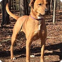 Adopt A Pet :: Donder - Harrisonburg, VA
