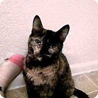 Adopt A Pet :: Paizley Pickles - Phoenix, AZ