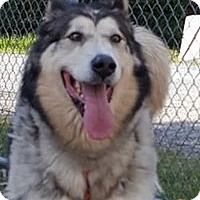 Adopt A Pet :: PORTER - Seattle, WA