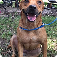 Adopt A Pet :: Daphne - Adamsville, TN