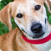 Adopt A Pet :: Mylo - Miami, FL