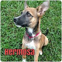 Adopt A Pet :: Hermosa - Greeneville, TN