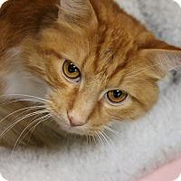 Adopt A Pet :: Jarvis - Medina, OH