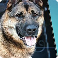 Adopt A Pet :: CESAR VON BERKUN - Los Angeles, CA