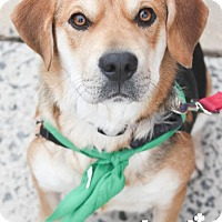 Adopt A Pet :: Savannah - Washington, DC