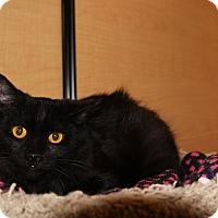 Adopt A Pet :: Ceva - Chandler, AZ