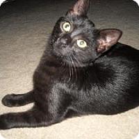 Adopt A Pet :: Gabby - Arlington, VA