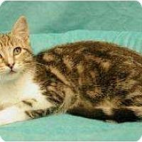 Adopt A Pet :: Sierra - Sacramento, CA