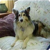 Adopt A Pet :: Dutchess - San Diego, CA