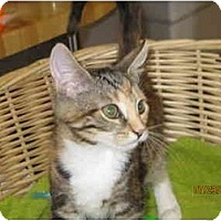 Adopt A Pet :: Fifa - Catasauqua, PA
