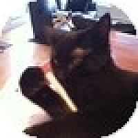 Adopt A Pet :: Blintz - Vancouver, BC