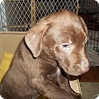 Adopt A Pet :: Sienna - Rome, NY