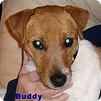 Adopt A Pet :: Buddy - Arenas Valley, NM