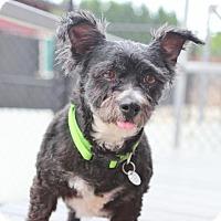 Adopt A Pet :: Sasha - Smyrna, GA