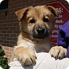 Adopt A Pet :: Duchess - Adoption Pending!