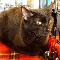 Adopt A Pet :: Alpha - Marietta, GA
