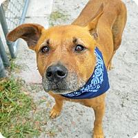 Adopt A Pet :: Conan - Umatilla, FL