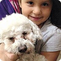 Adopt A Pet :: Fitz - Boulder, CO